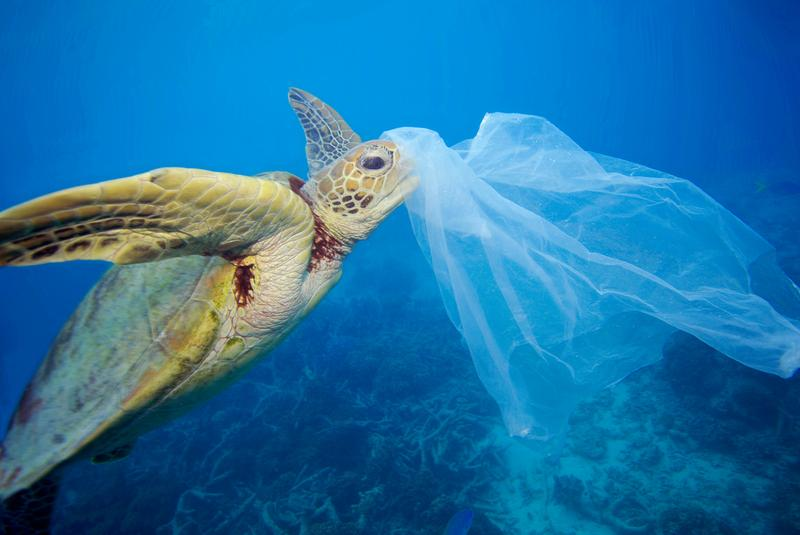 6 Reasons Why You Should Switch from Using Plastic Bags to Cloth Bags